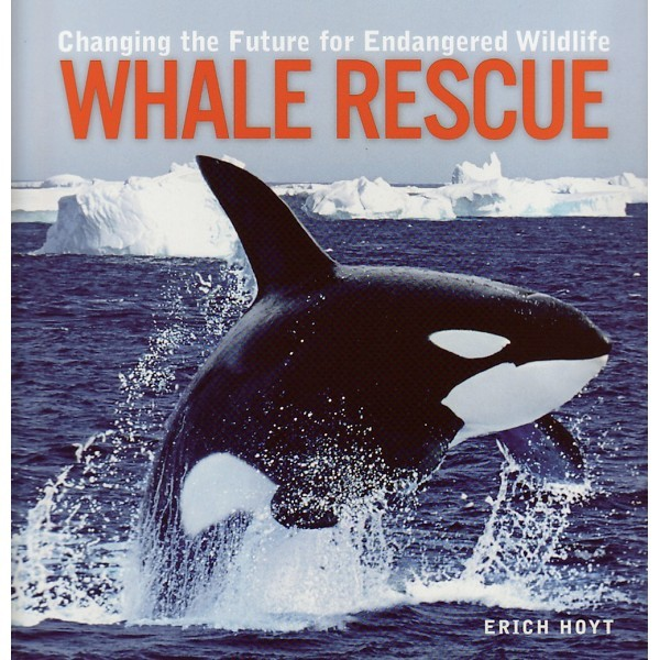 Amazing Whales – A Whale Book for Children Easy Reader Whale Picture Book
